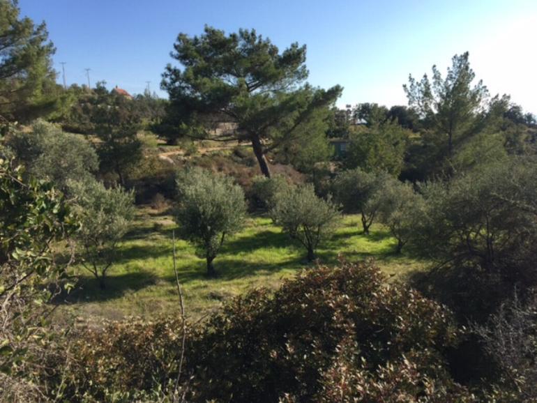 1062 – plot in Souni Zanatzia