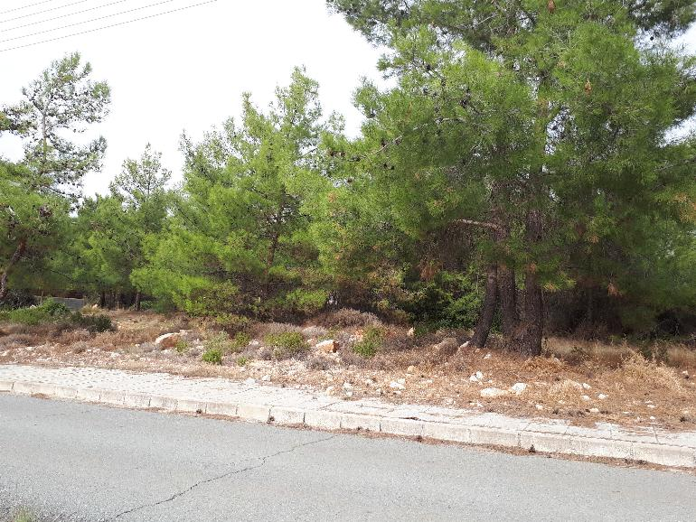 1149 – Plot in Souni Limassol