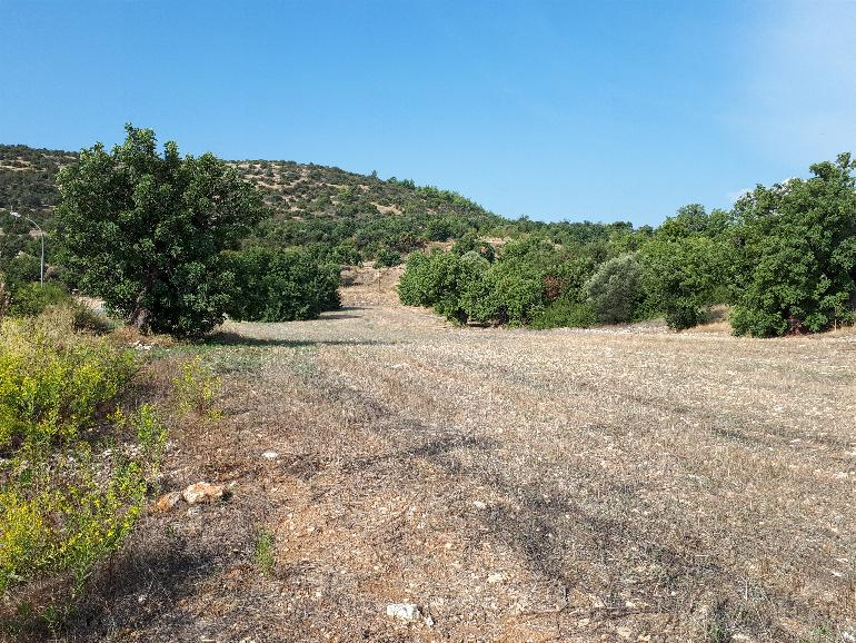 1139 – plots in Mathikiloni
